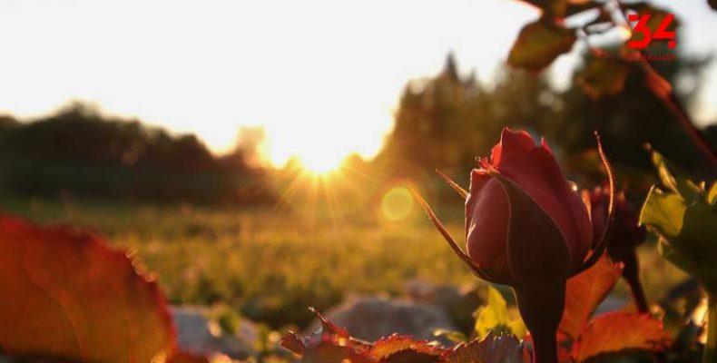 «Голоса мирных»: в городах, где живут переселенцы, появляются аллеи роз